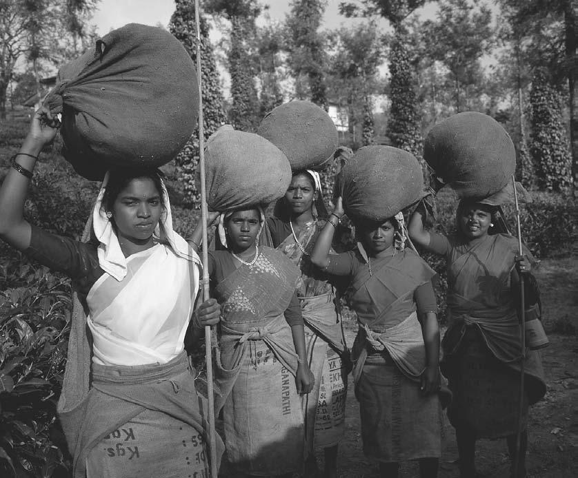 CONCLUSION 301 Kerala women carrying tealeaf harvest on their heads near Kanjirappally, 1999. (Robert van der Hilst/ Corbis) supported by the dynamism of the Indian diaspora.