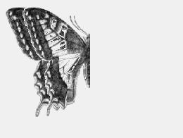 Reflection symmetry of a butterfly about the y axis The final geometric transformation that concerns modern dance choreography in this research is a glide
