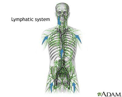 The Lymphatic and Immune Systems Lapbook Teacher s/study Guide http://www.nlm.nih.gov/medlineplus/ency/imagepages/1104.