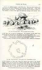 WITH AN INTRODUCTION BY PETER HARBISON B2. BORLASE, William G. The Dolmens of Ireland.