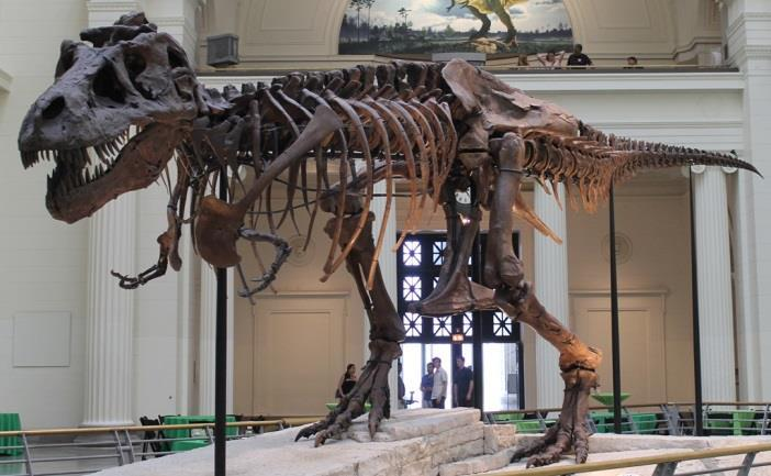 Possible sightseeing activities include but are not limited to: The Field Museum home to SUE, the largest, most extensive and best preserved T-Rex ever found!