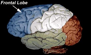 planning Parietal Lobe - higher sensory and language functions